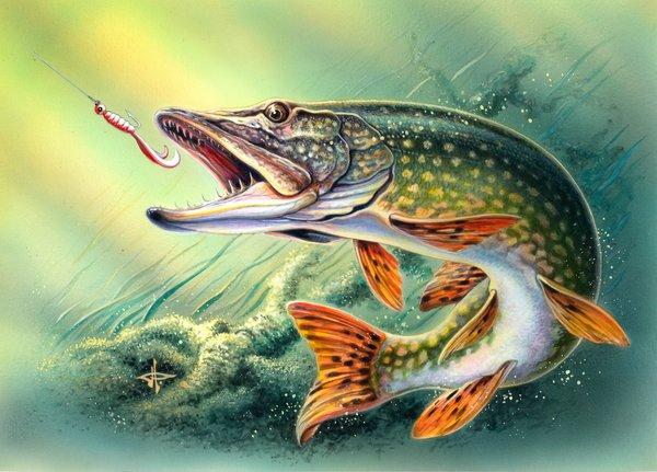 Nagyegyháza horgásztó pergetőtavában szép csukák foghatóak.